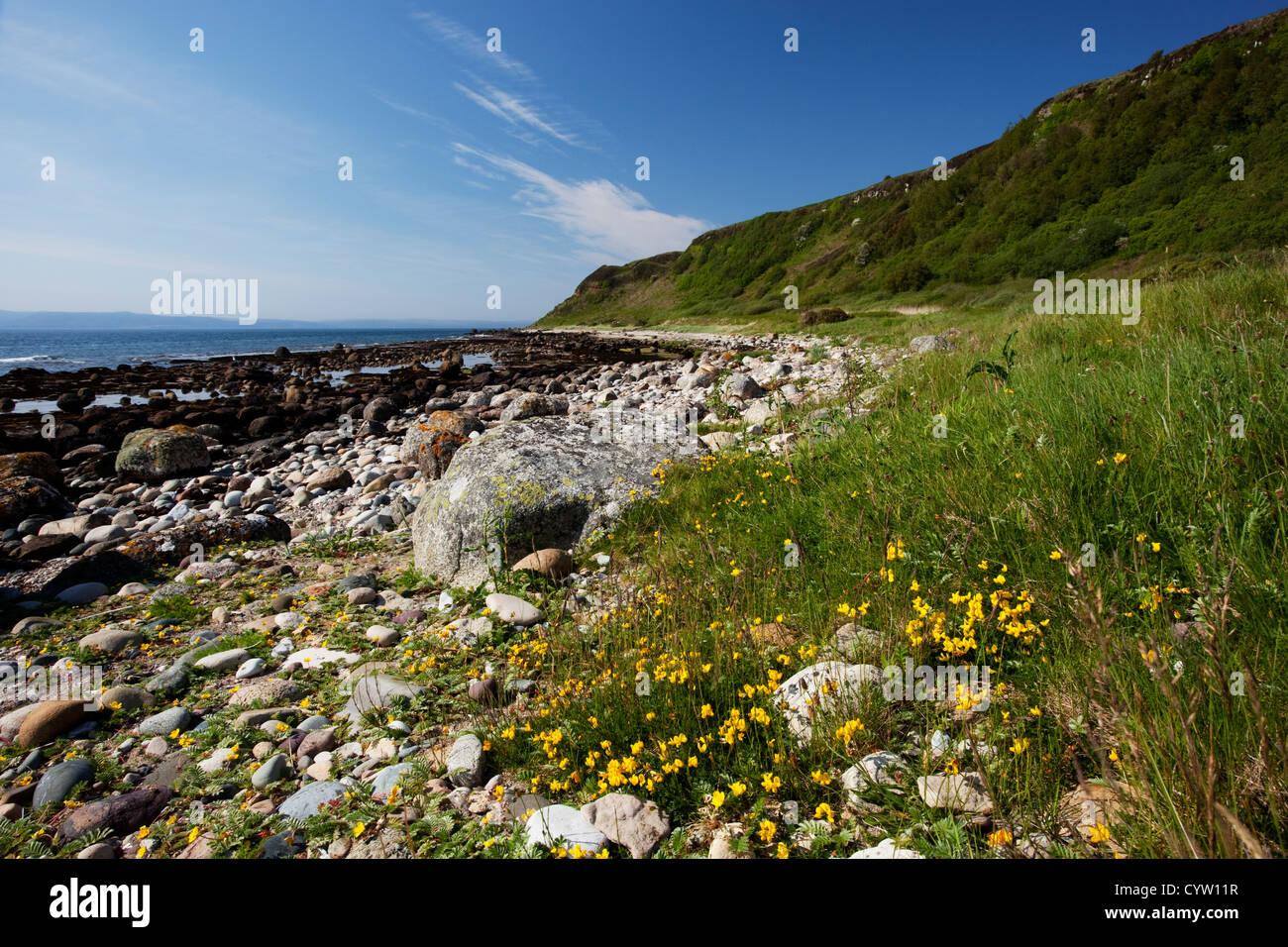 Afficher le long de la côte au Drumadoon près de Blackwaterfoot sur l'île d'Arran, Ecosse, Royaume-Uni Banque D'Images