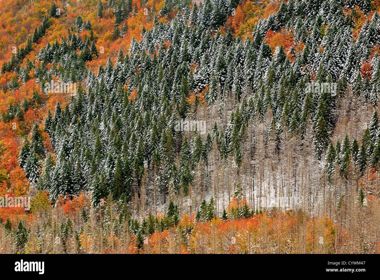 Les Apennins en couleurs de l'automne, Emilia-Romagna, Italie Photo Stock