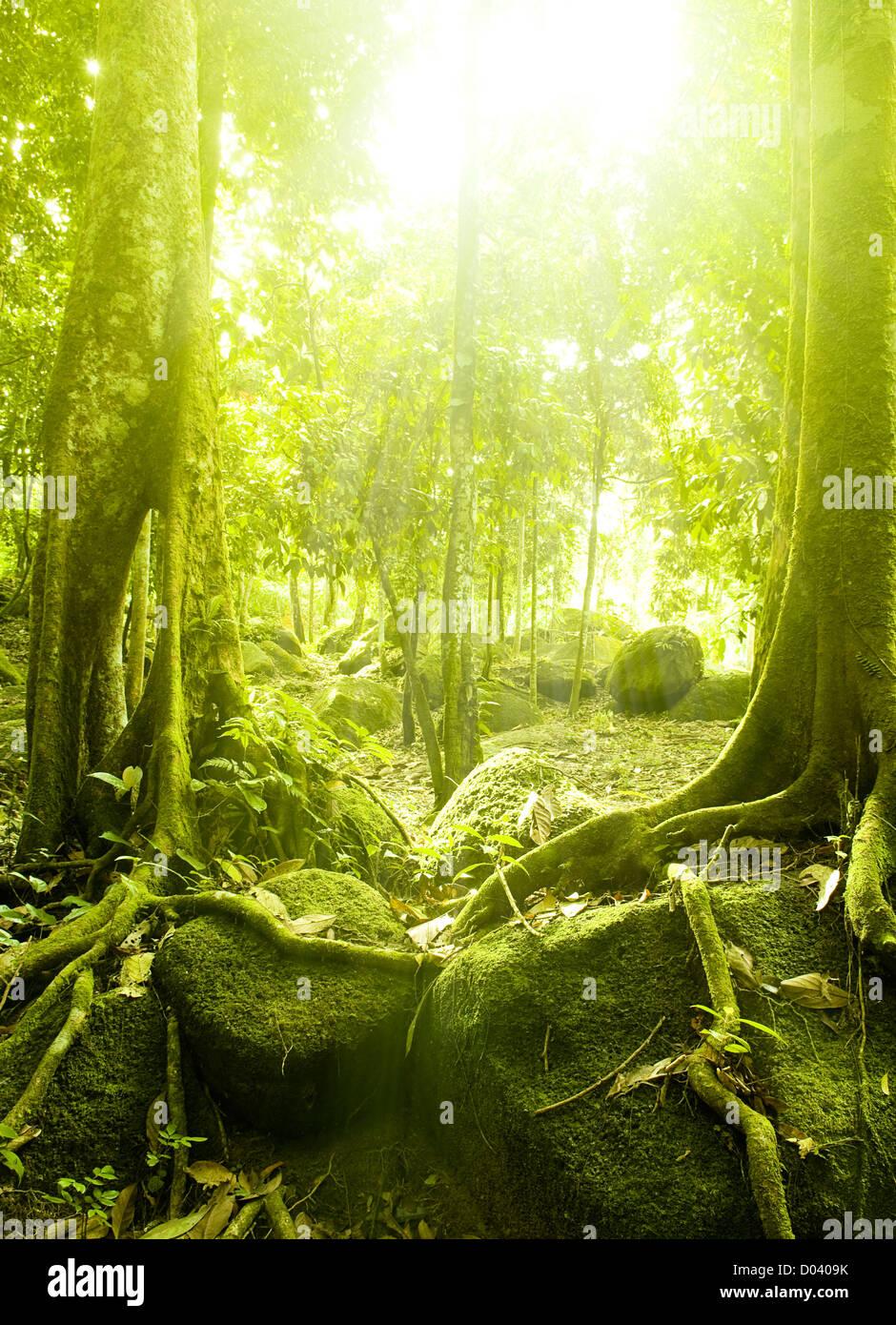 Vert forêt avec rayon de lumière Photo Stock
