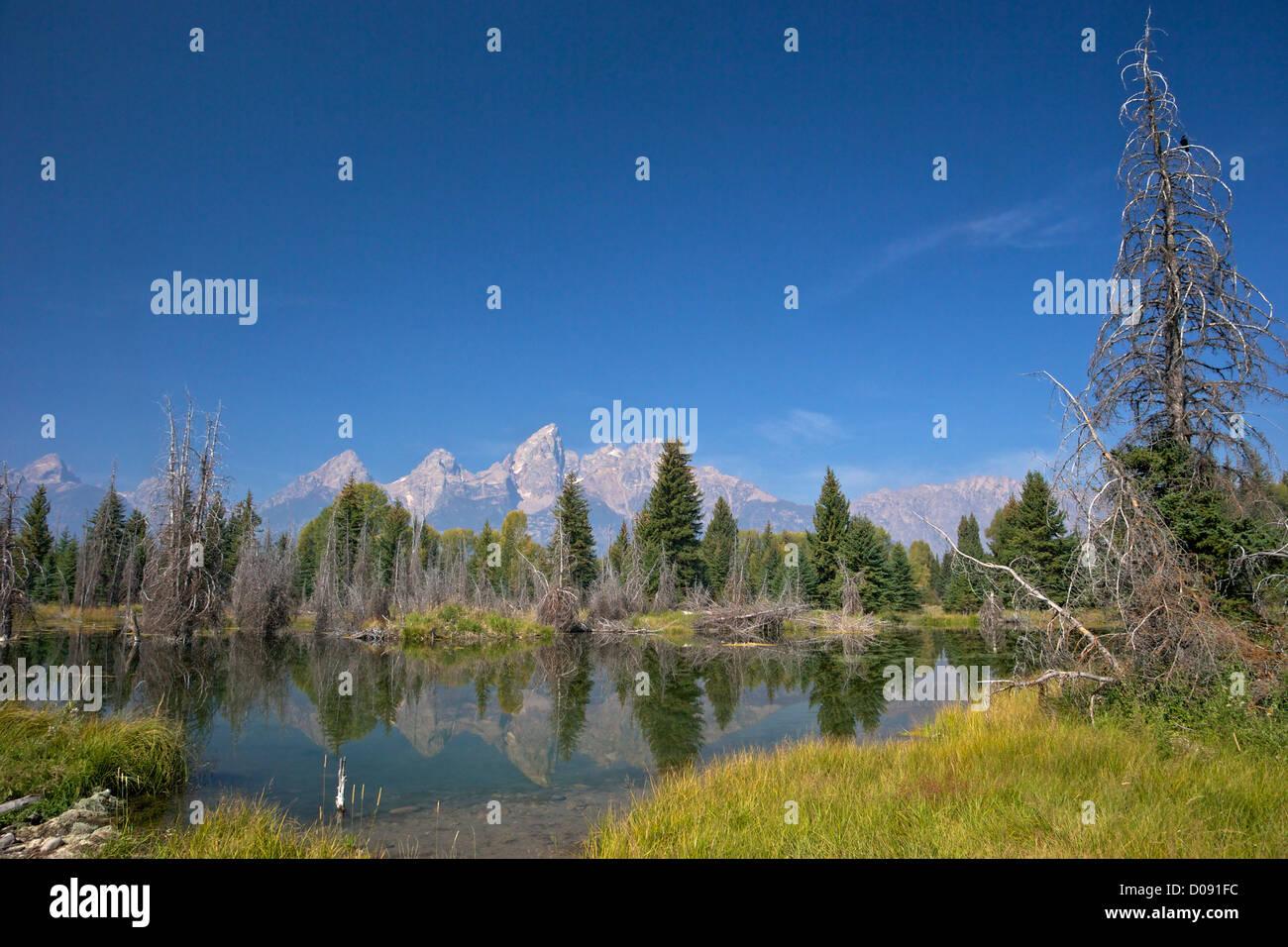 La rivière Snake, à l'atterrissage Schwabacher, Grand Teton National Park, Wyoming, USA Banque D'Images