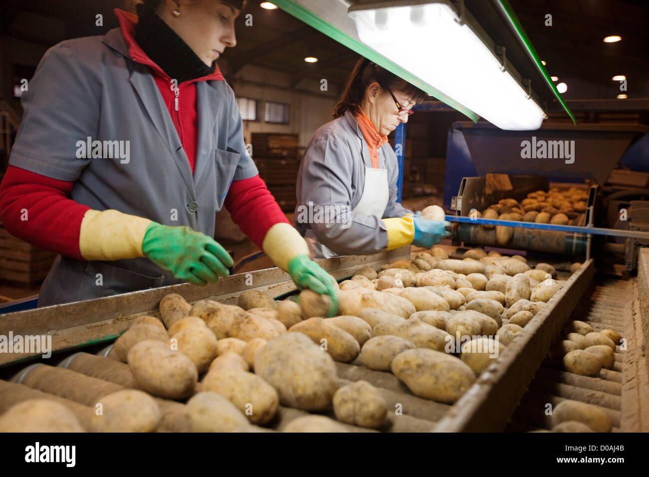 Horticultores l'industrie de pommes de terre manipulées el Torcal Antequera malaga andalousie espagne Photo Stock
