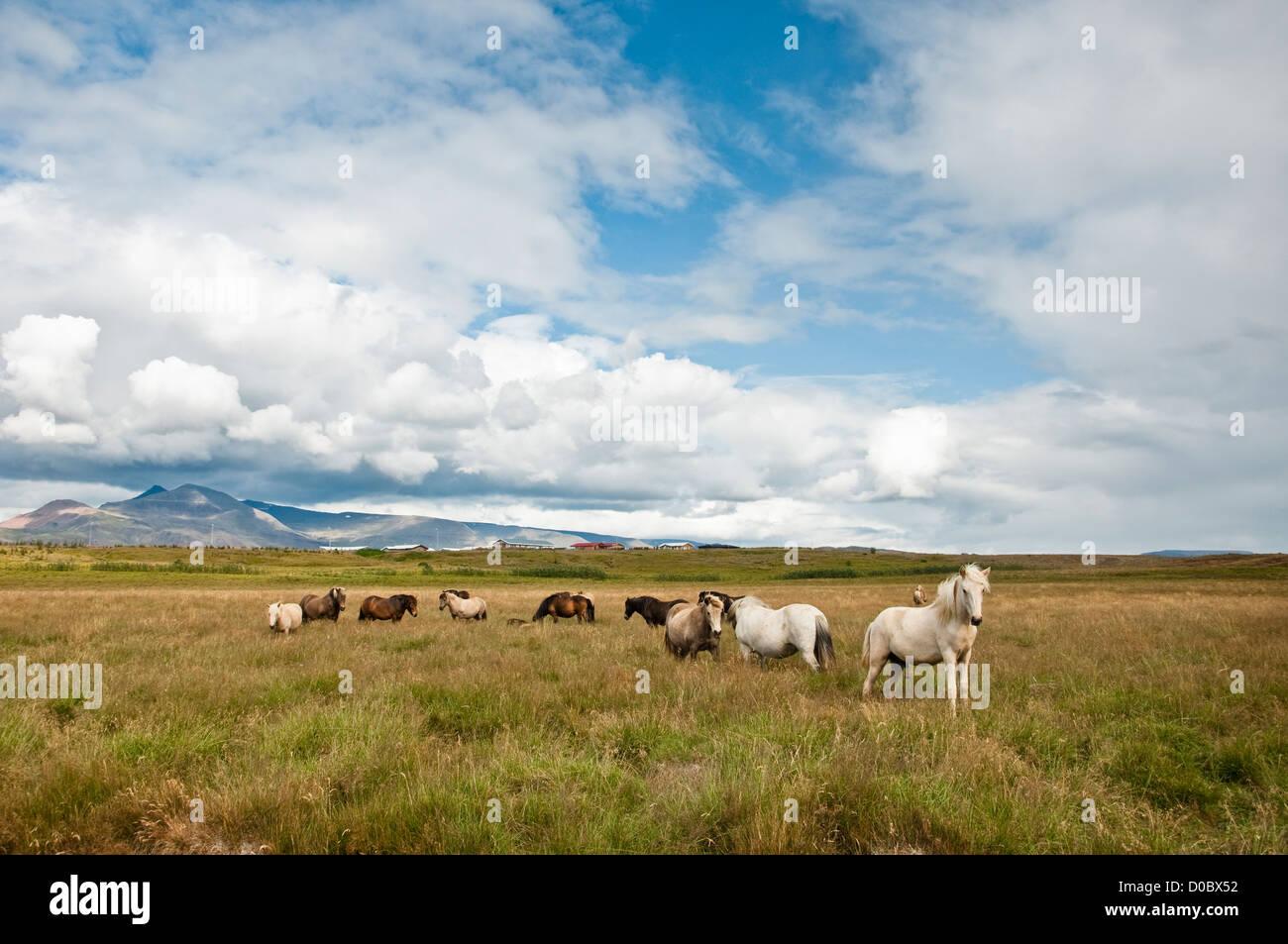 Les chevaux se détendre dans l'herbe d'une ferme au pied des montagnes Photo Stock