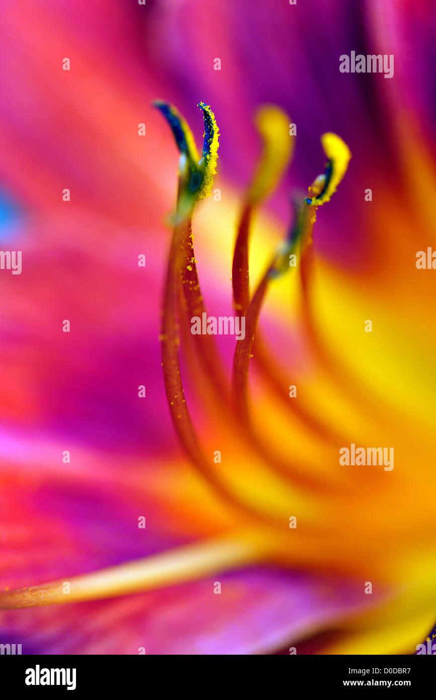 Beauté, détail, fleur, natur, lilly, stil life, beau, beauté, Fleur, fleurs, jardin botanique, botanique, Photo Stock