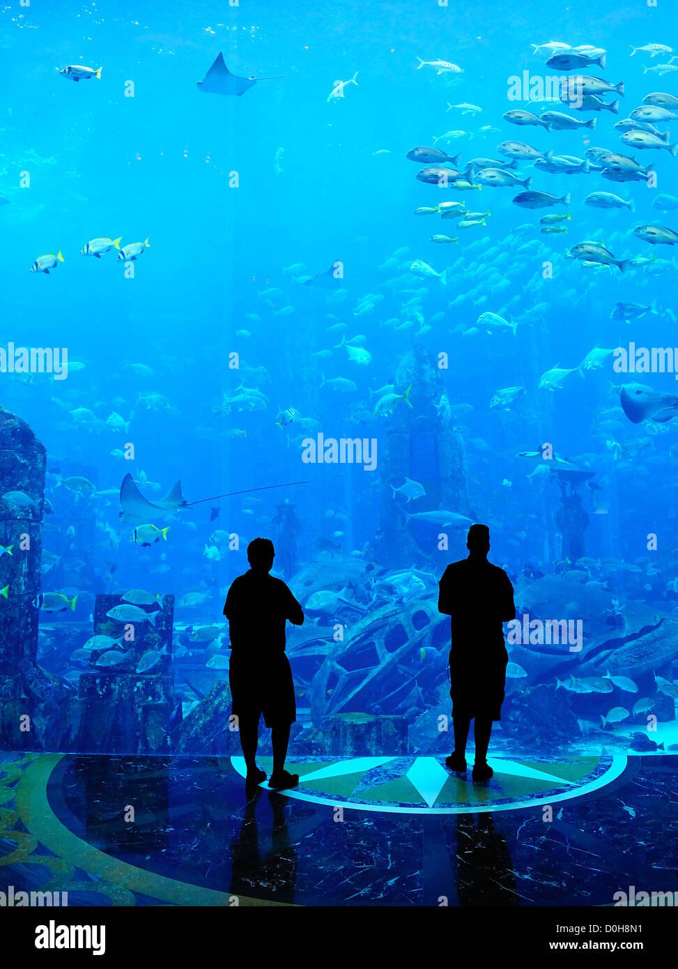Grand Aquarium - Gens d'ossature à la recherche à l'étonnant poisson Photo Stock