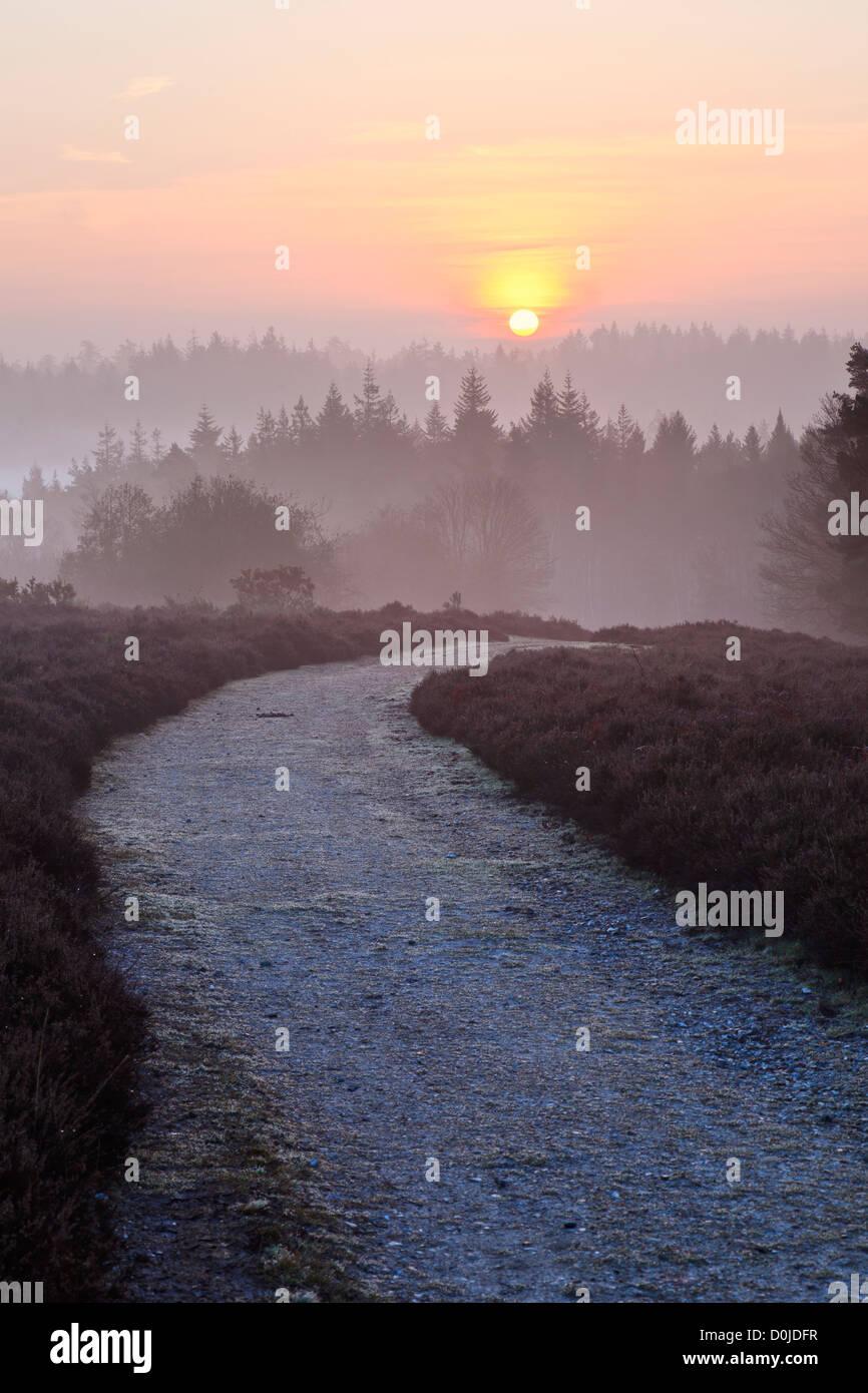 Vue d'Mogshade Hill dans le New Forest. Banque D'Images