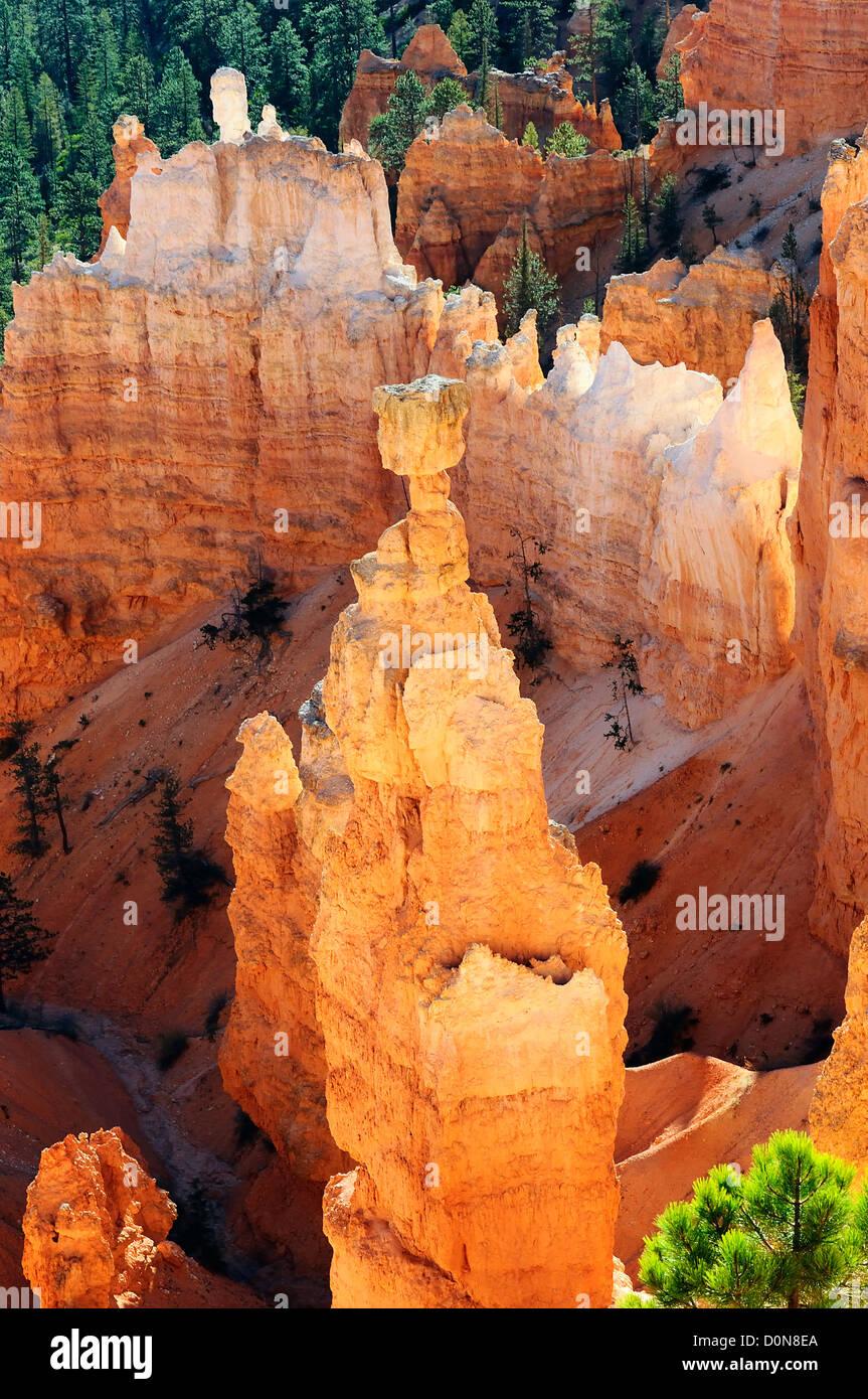 Hoodoo spectaculaire rock tours de Bryce Canyon, Utah, USA Photo Stock