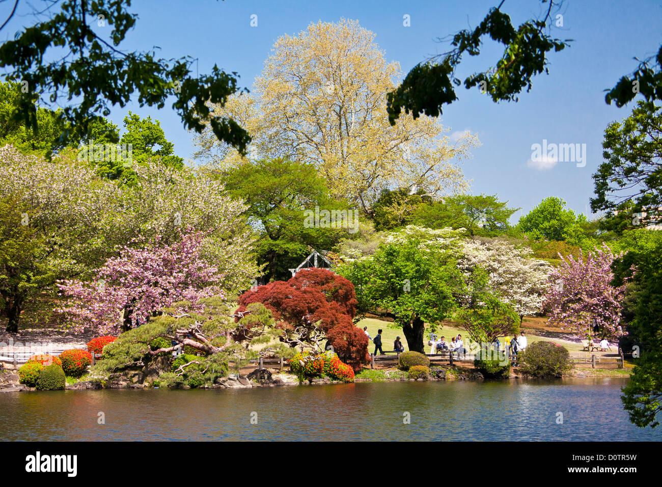 Le Japon, Asie, vacances, voyage, Ville, Tokyo, shinjuku, Shinjuku Gyoen, District,, Jardin, parc, étang, printemps Photo Stock