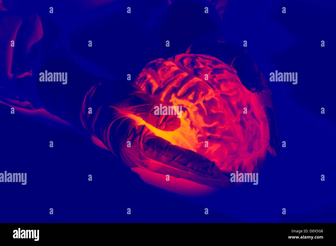 Les mains gantées générée par ordinateur holding cerveau humain résumé Photo Stock