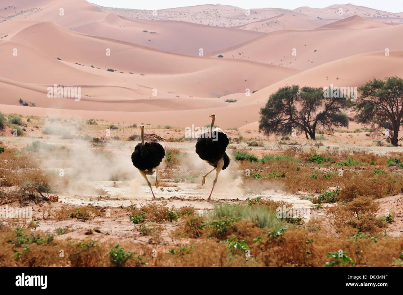 Dunes Afrique Hills Namib Naukluft Park Namibie Sossusvlei peur de charge de l'Afrique de l'exécution Photo Stock