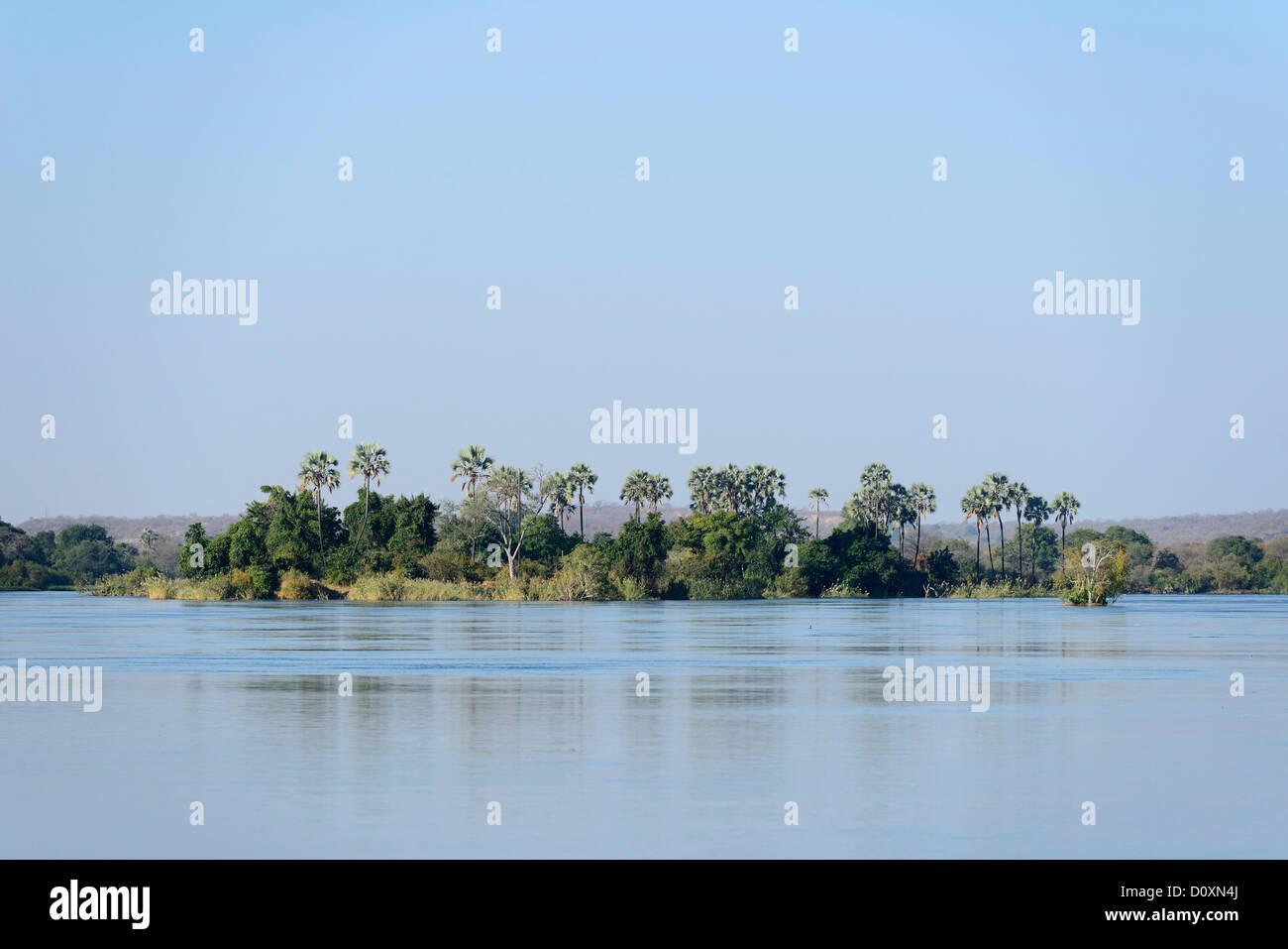L'Afrique, le Sud, le Zimbabwe, Zambèze, fleuve, île, large, palm, arbre, étendue Photo Stock