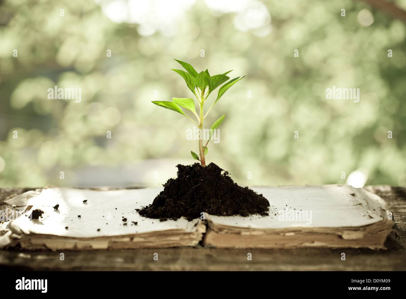 Jeune plante contre l'arrière-plan naturel Photo Stock