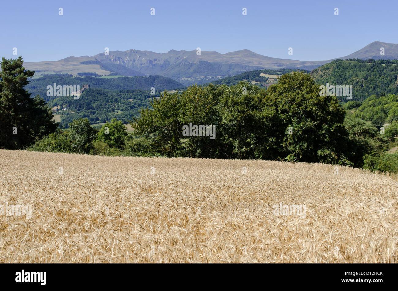 Paysage rural dans le Puy-de-Dôme région. Puy de Sancy, en arrière-plan. Banque D'Images