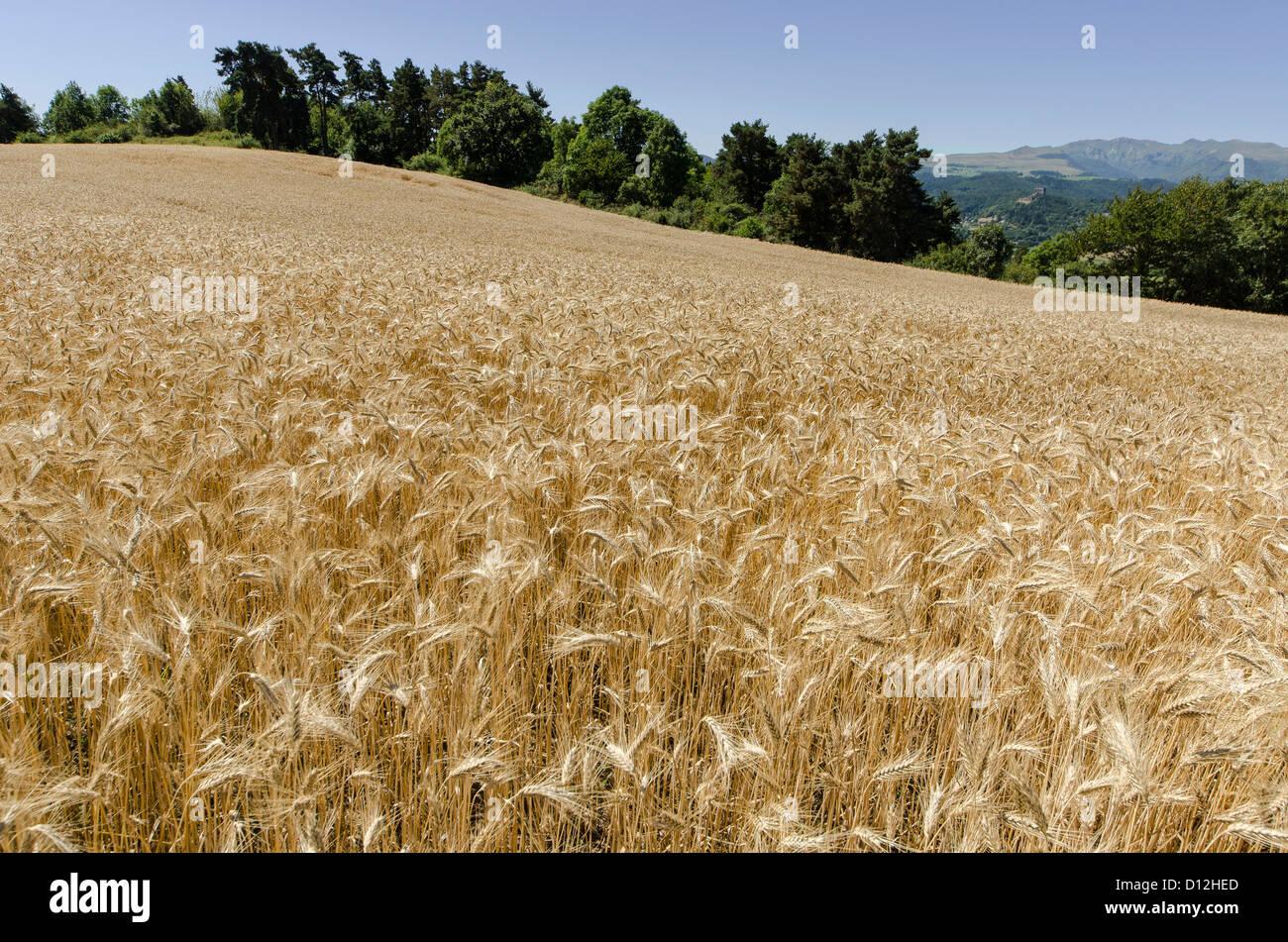 Paysage rural Banque D'Images