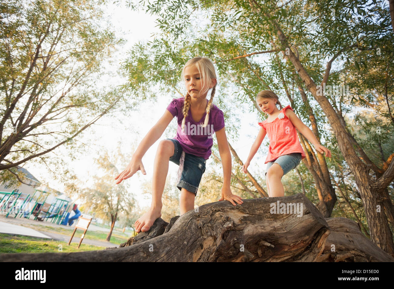 USA, Utah, Léhi, deux petites filles (4-5, 6-7) l'escalade sur le très grand arbre branche Photo Stock
