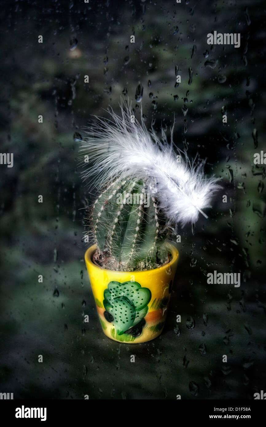 Un cactus dans une plante en pot avec une plume blanche derrière une fenêtre avec des gouttes de pluie Photo Stock