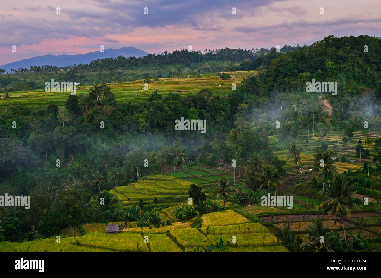 Champs et forêt tropicale, Senaru, Lombok en Indonésie, en Asie du Sud-Est, l'Asie Photo Stock