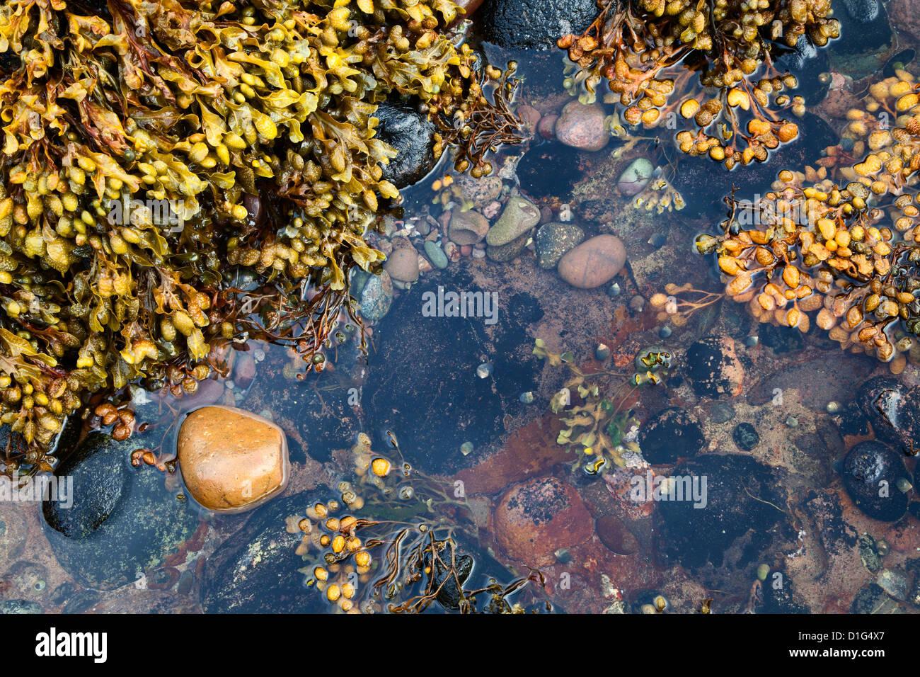 Piscine dans les rochers à Catterline, Aberdeenshire, Ecosse, Royaume-Uni, Europe Photo Stock