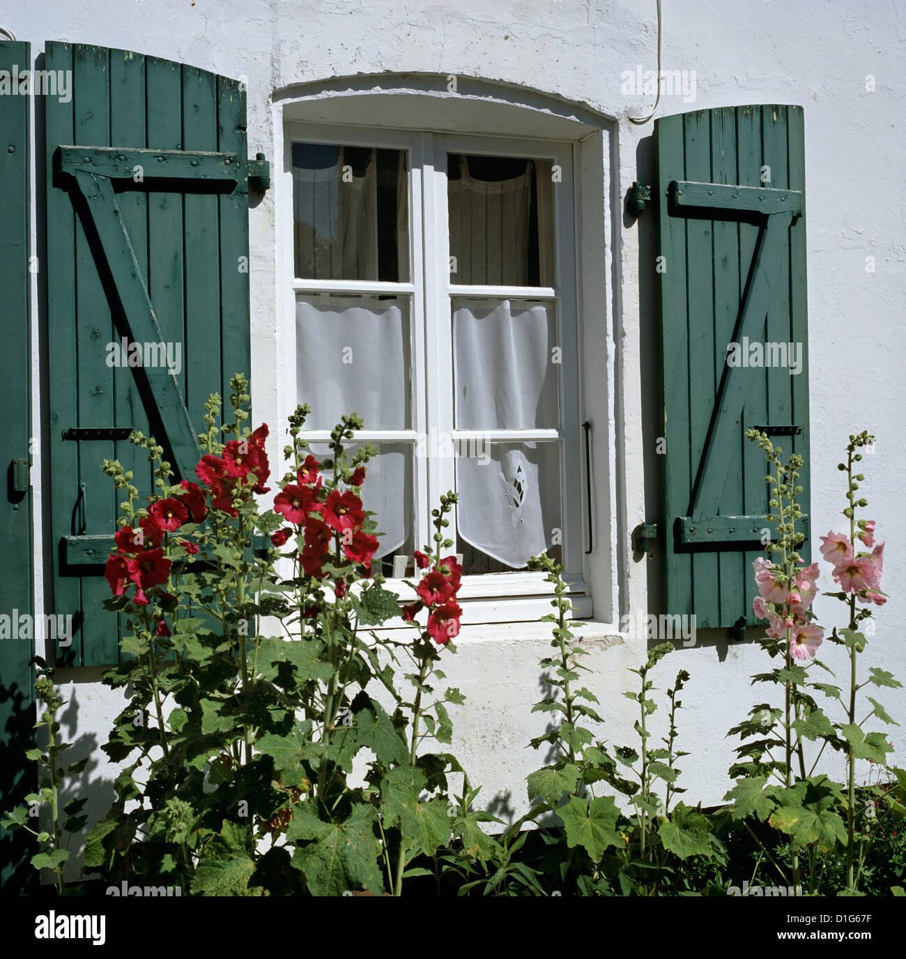 Scène typique de fenêtres à volets et roses trémières, Saint Martin, Ile de Ré, Poitou Photo Stock