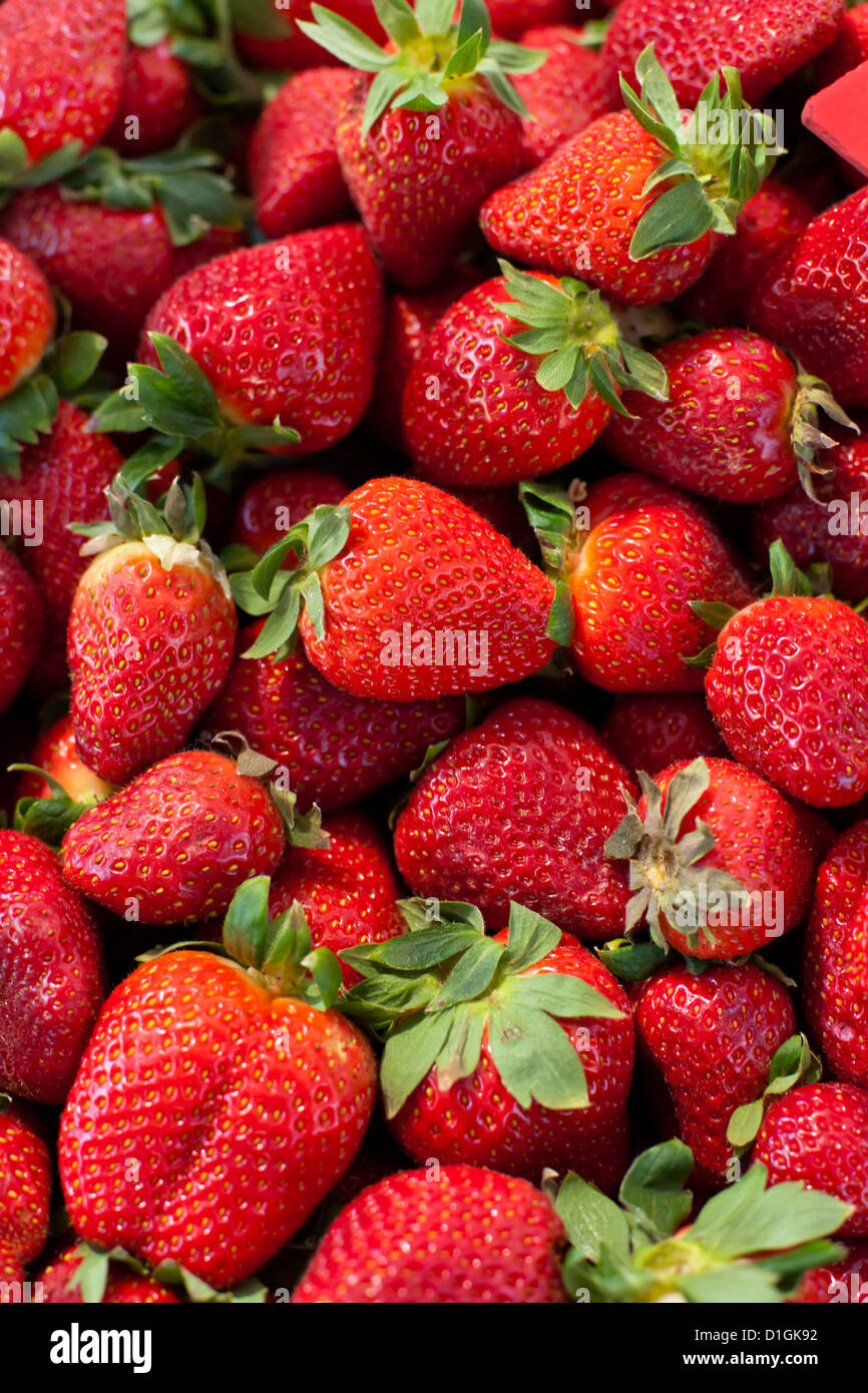 Les fraises pour la vente au marché du dimanche matin, Pollenca, Tramuntana, Majorque, Iles Baléares, Photo Stock