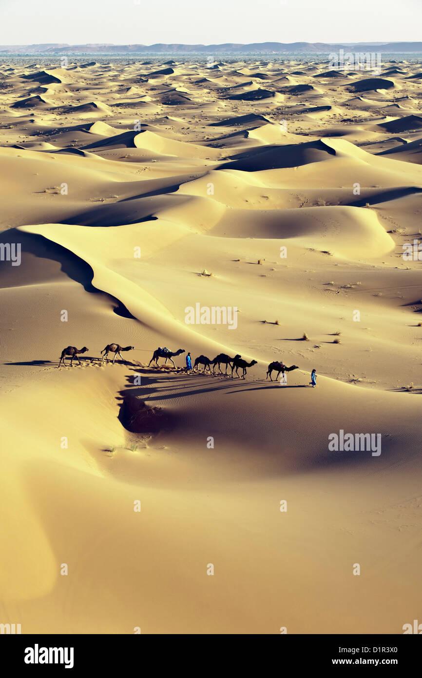 Le Maroc, M'Hamid, Erg Chigaga dunes de sable. Désert du Sahara. Caravane de chameaux et chameliers. Photo Stock