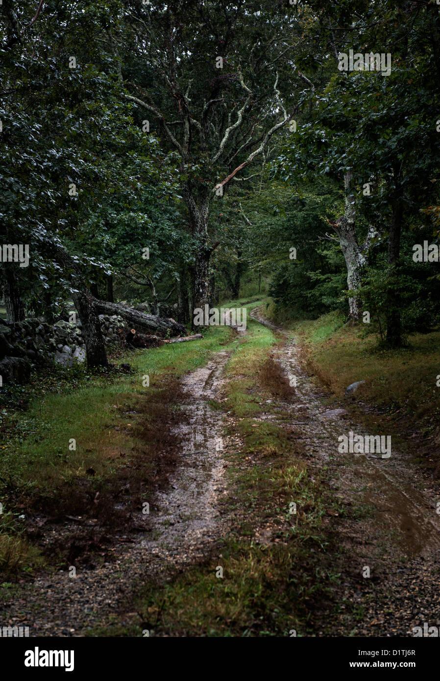 Morne chemin de terre. Photo Stock