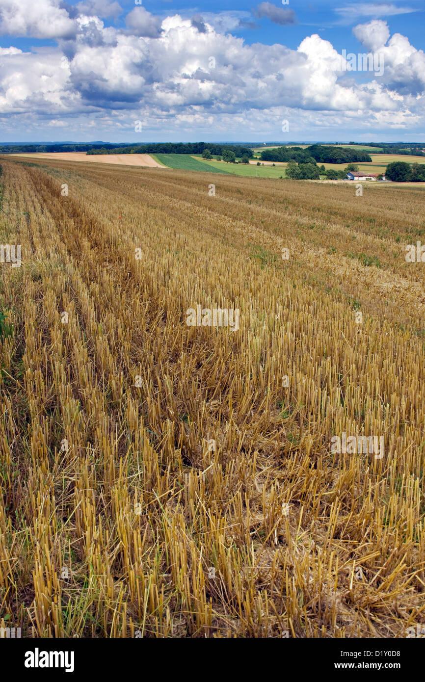 Stubblefield de blé sur les terres agricoles au paysage rural Photo Stock