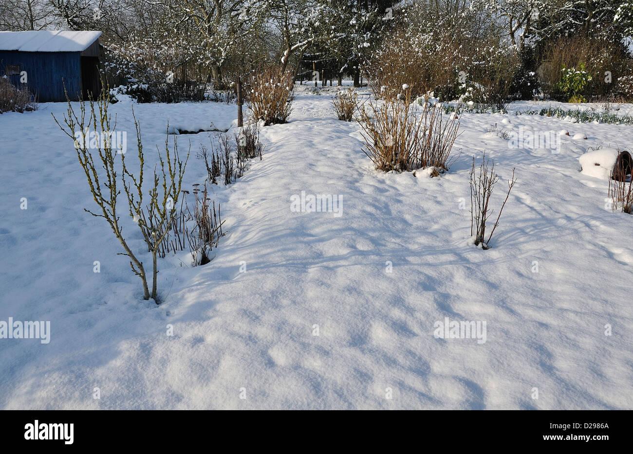 Le Jardin Potager En Janvier jardin potager sous la neige photos & jardin potager sous la