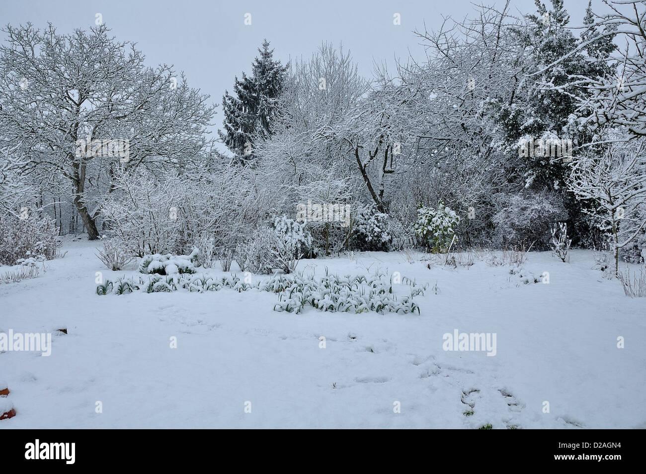 Le Jardin Potager En Janvier jardin potager sous la neige en hiver photos & jardin