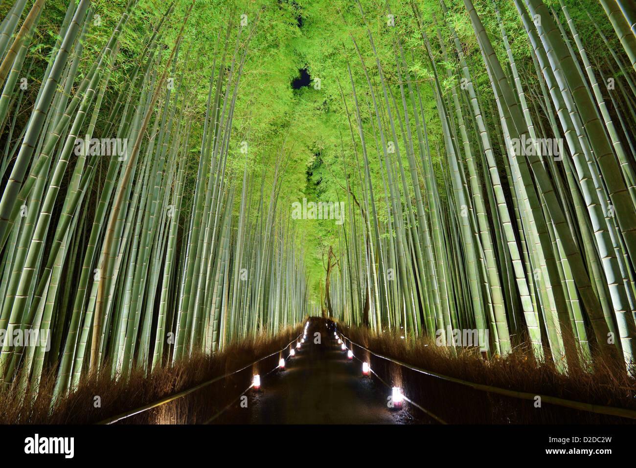 La forêt de bambou de Kyoto, au Japon. Photo Stock