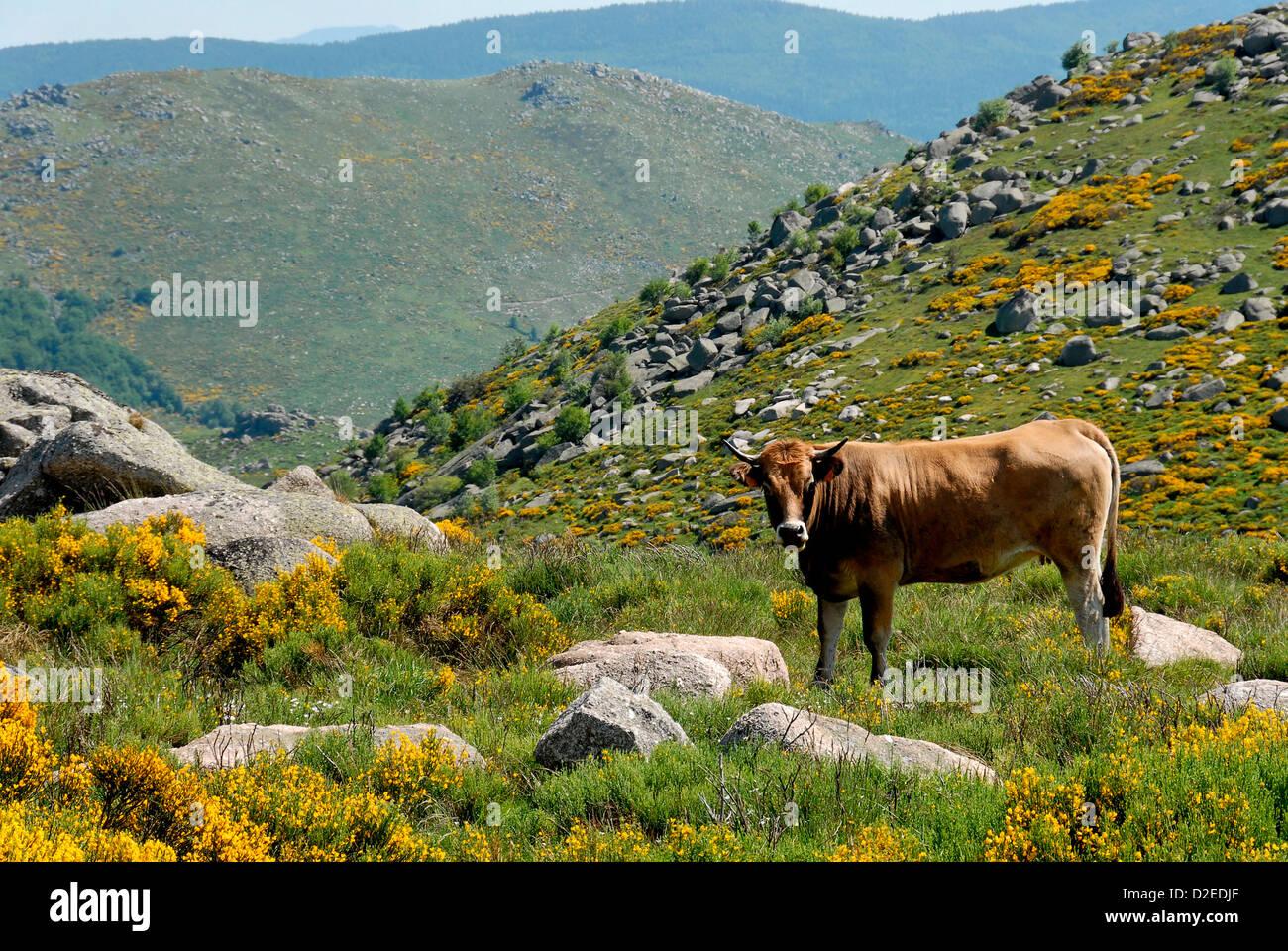 Languedoc Roussillon paysage