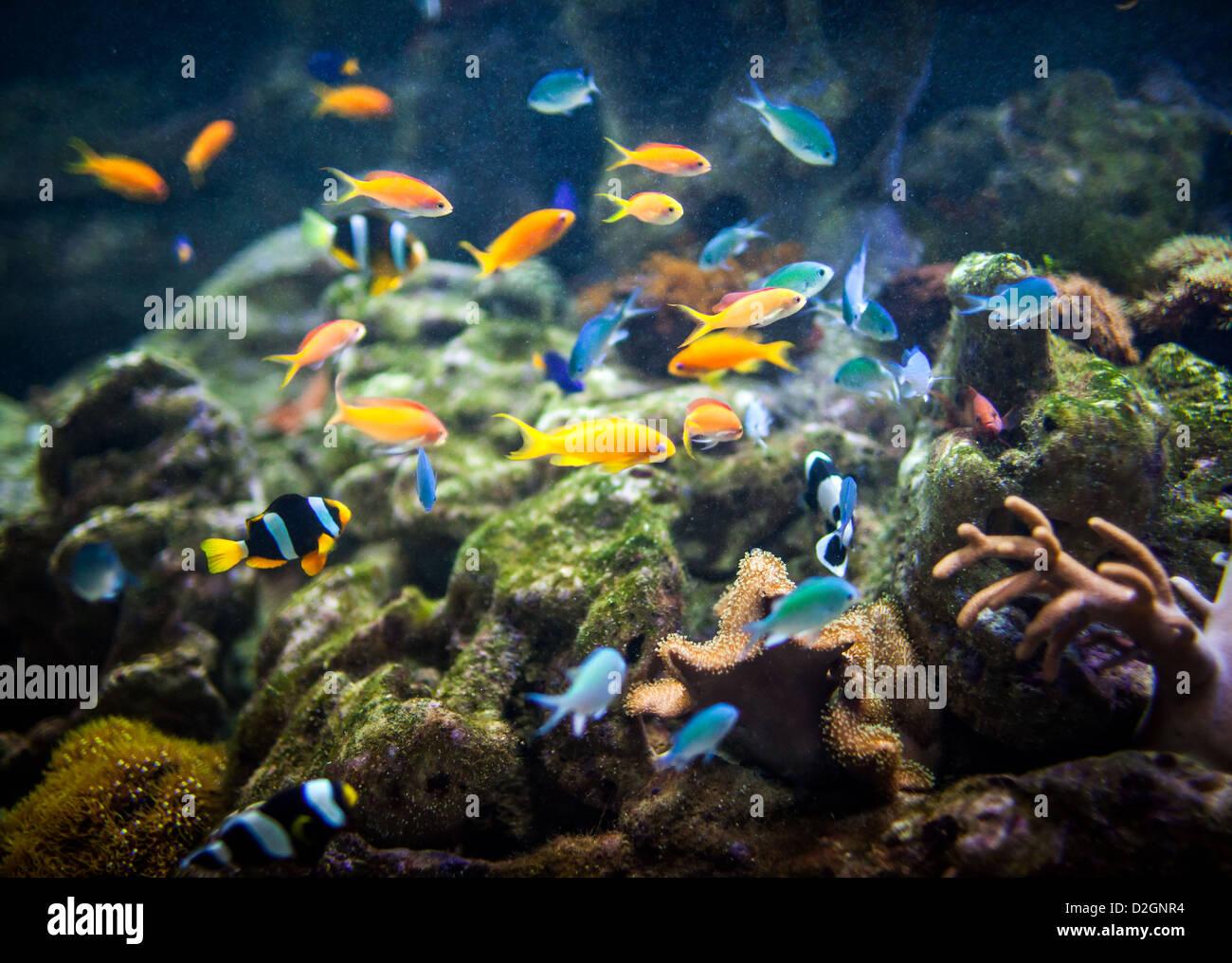 Les poissons dans un aquarium ... Photo Stock