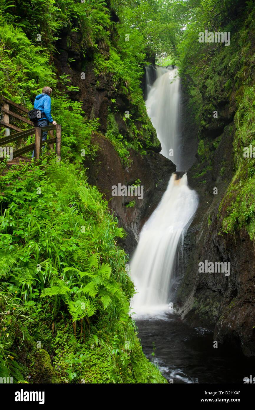 Randonneur sur passerelle en bois à côté d'ESS-na-Larach cascade, Glenariff Forest Park, dans le comté d'Antrim, Banque D'Images