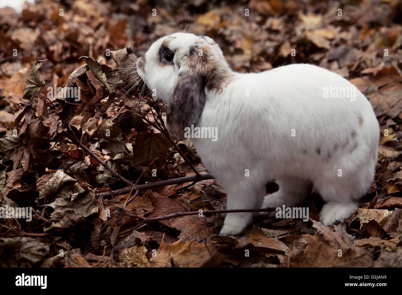 Blancs et très mignon lapin sur fond de feuilles Photo Stock
