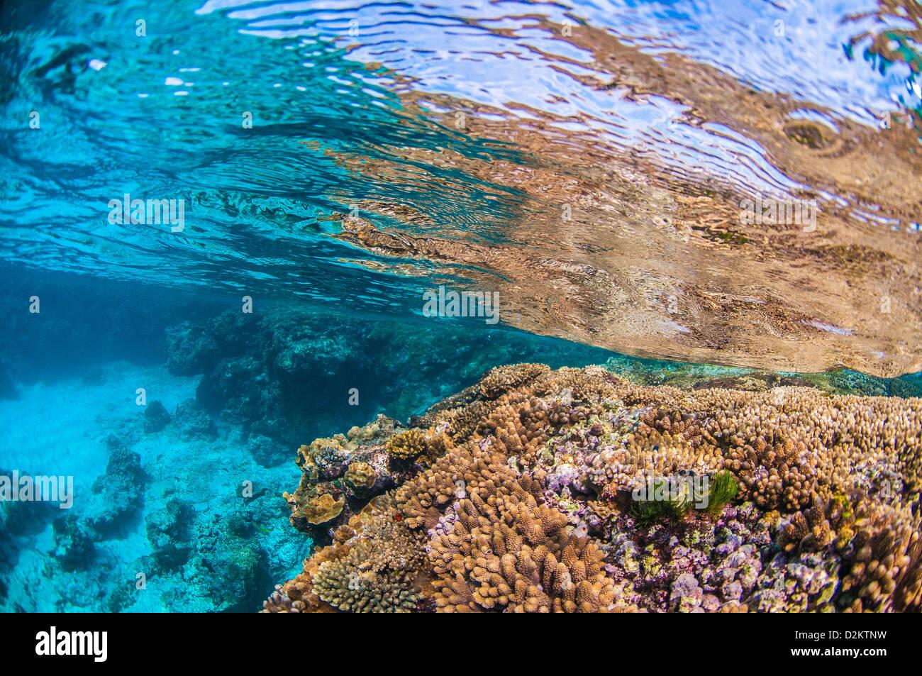 Scène sous-marine des récifs de corail, Lady Elliot Island, Grande Barrière de Corail, Queensland, Photo Stock