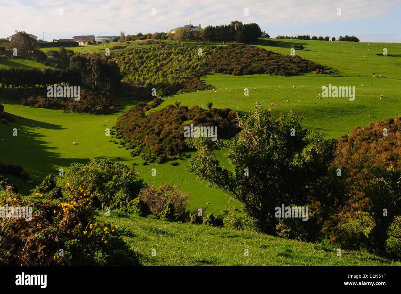 Plaines de Péninsule d'Otago, île du Sud, Nouvelle-Zélande, Pacifique Photo Stock
