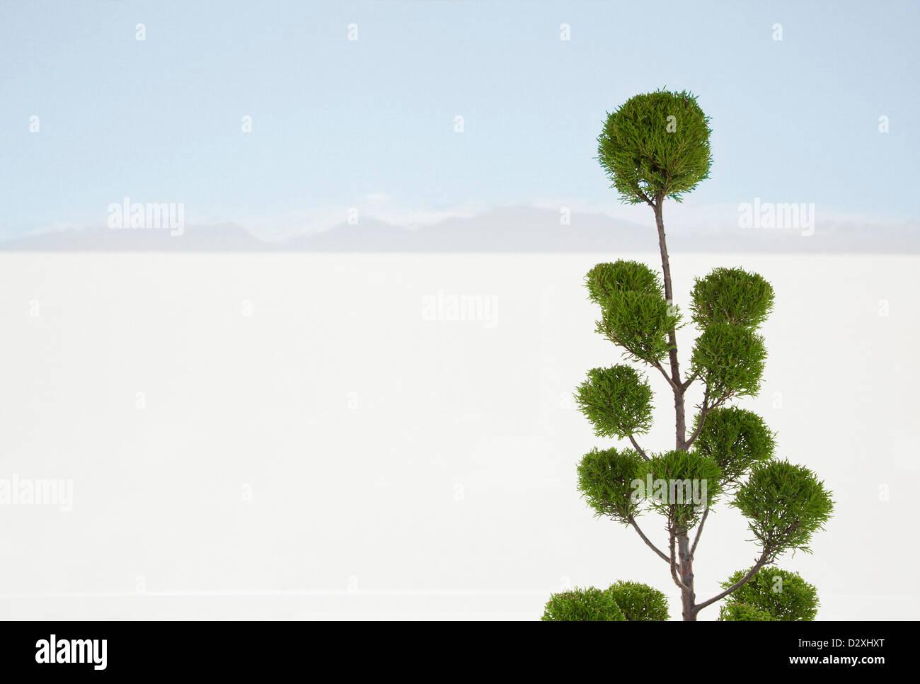 Désert de sable blanc avec des arbres en arrière-plan Photo Stock