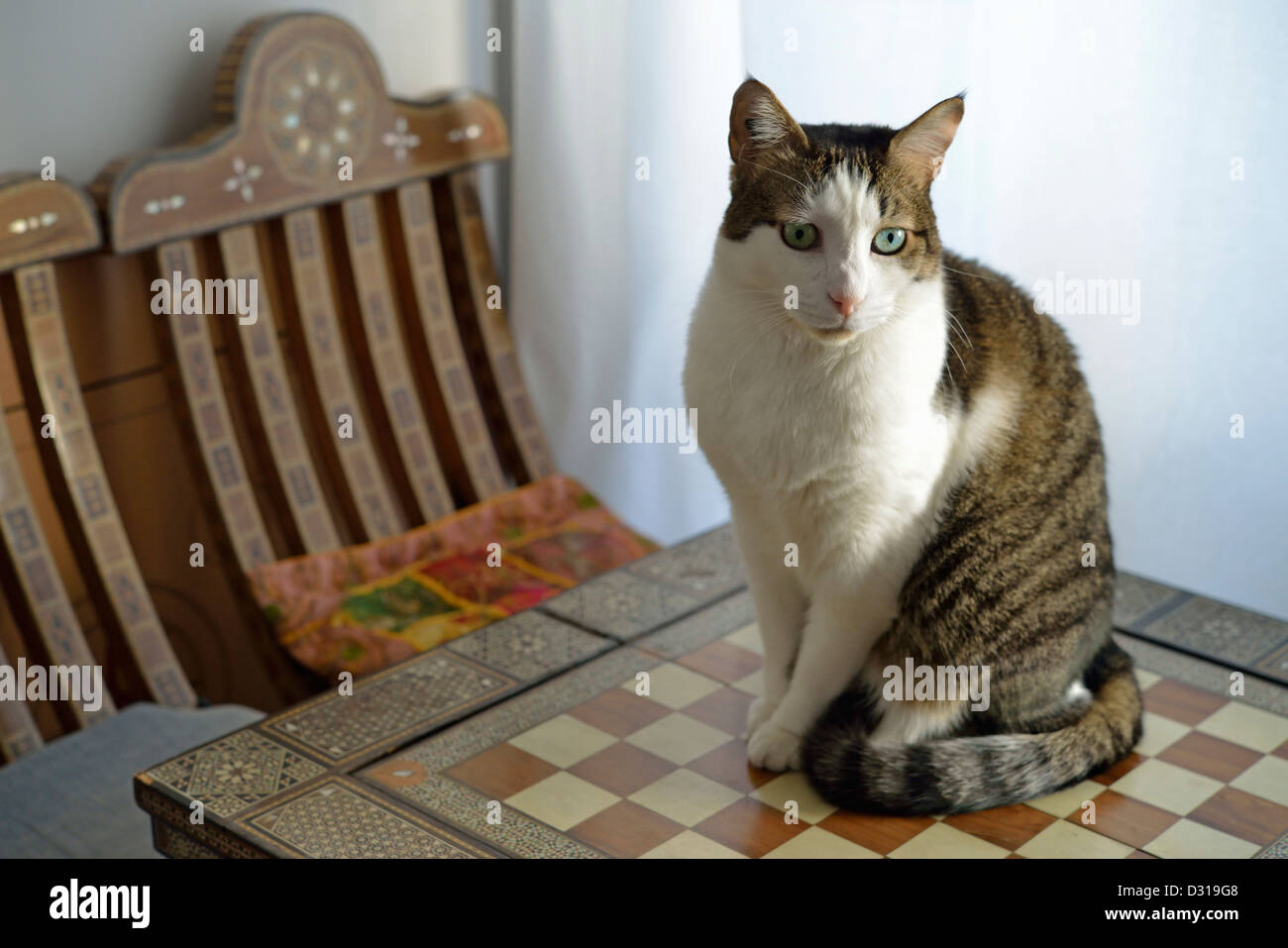 Chat assis sur une table à l'intérieur Photo Stock