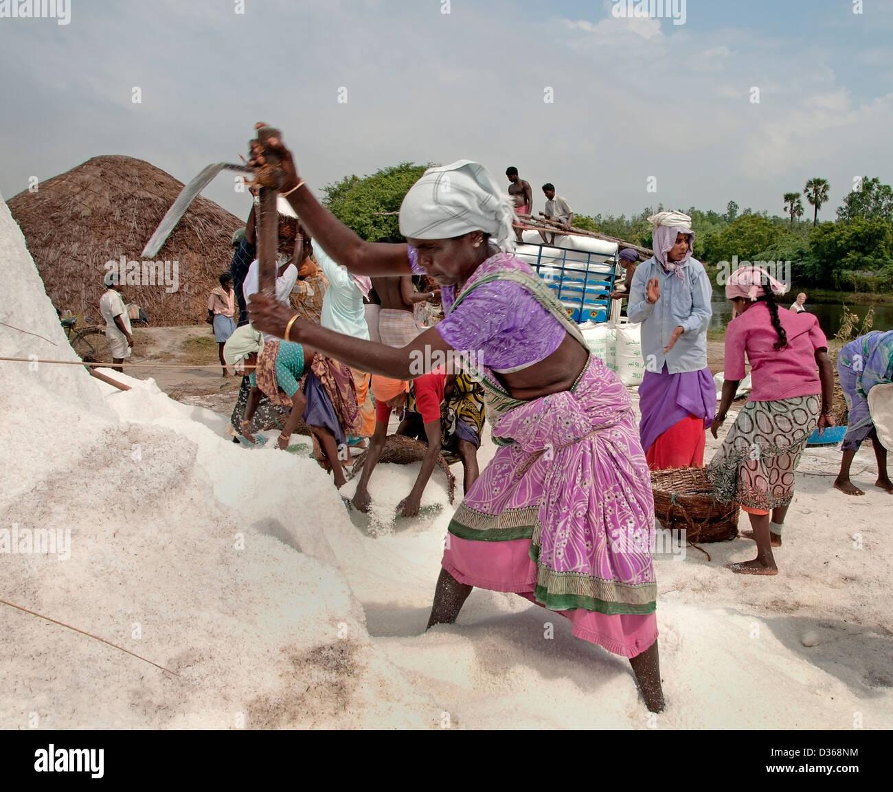Puducherry ( Rhône-Alpes ) l'Inde Tamil Nadu production de sel Photo Stock