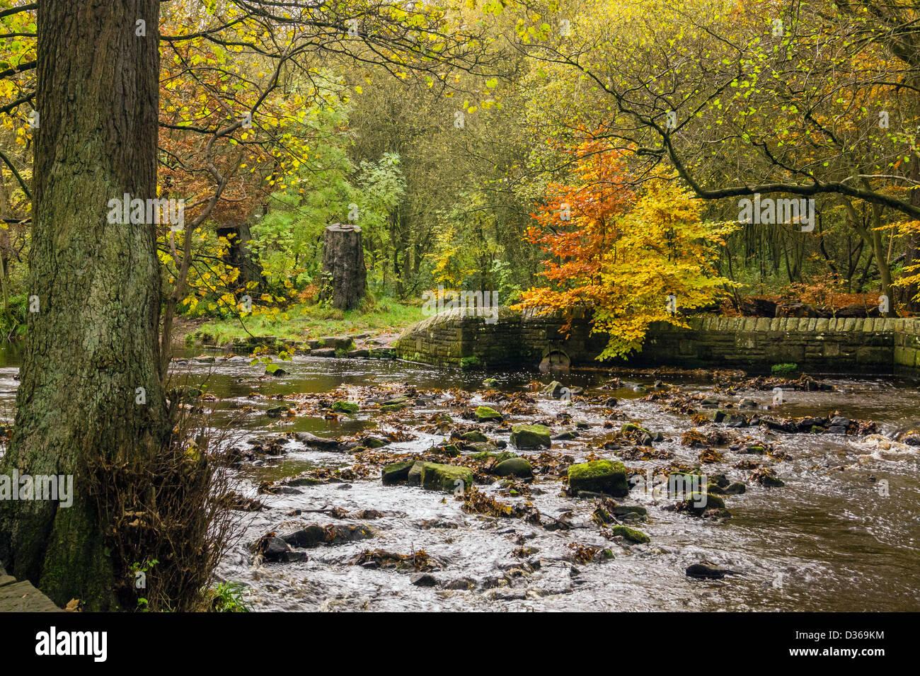Paysage naturel à l'automne et l'automne. Banque D'Images
