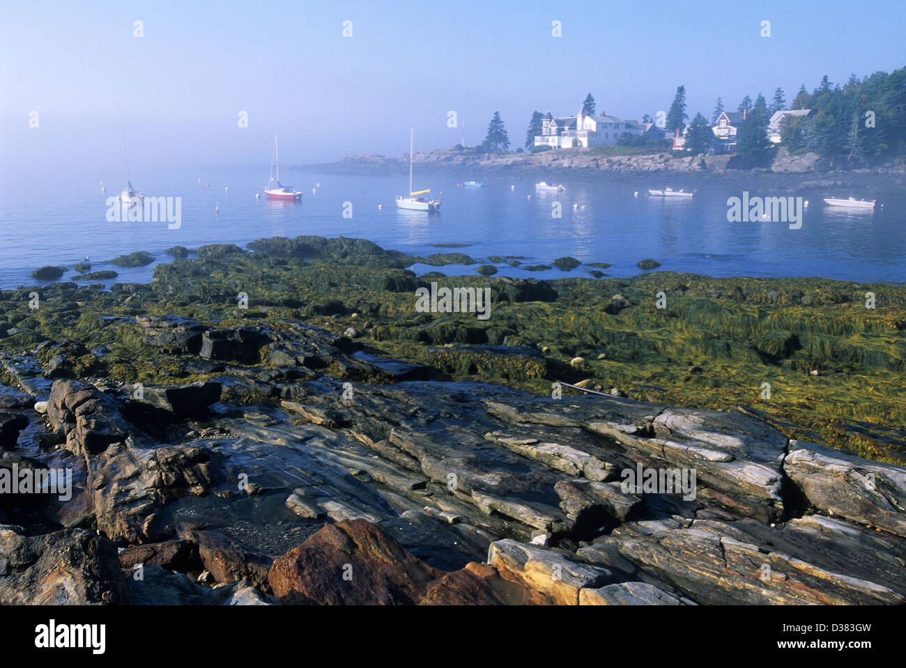 Elk282-1427, Maine Ocean Point, l'aménagement du littoral dans le brouillard Photo Stock