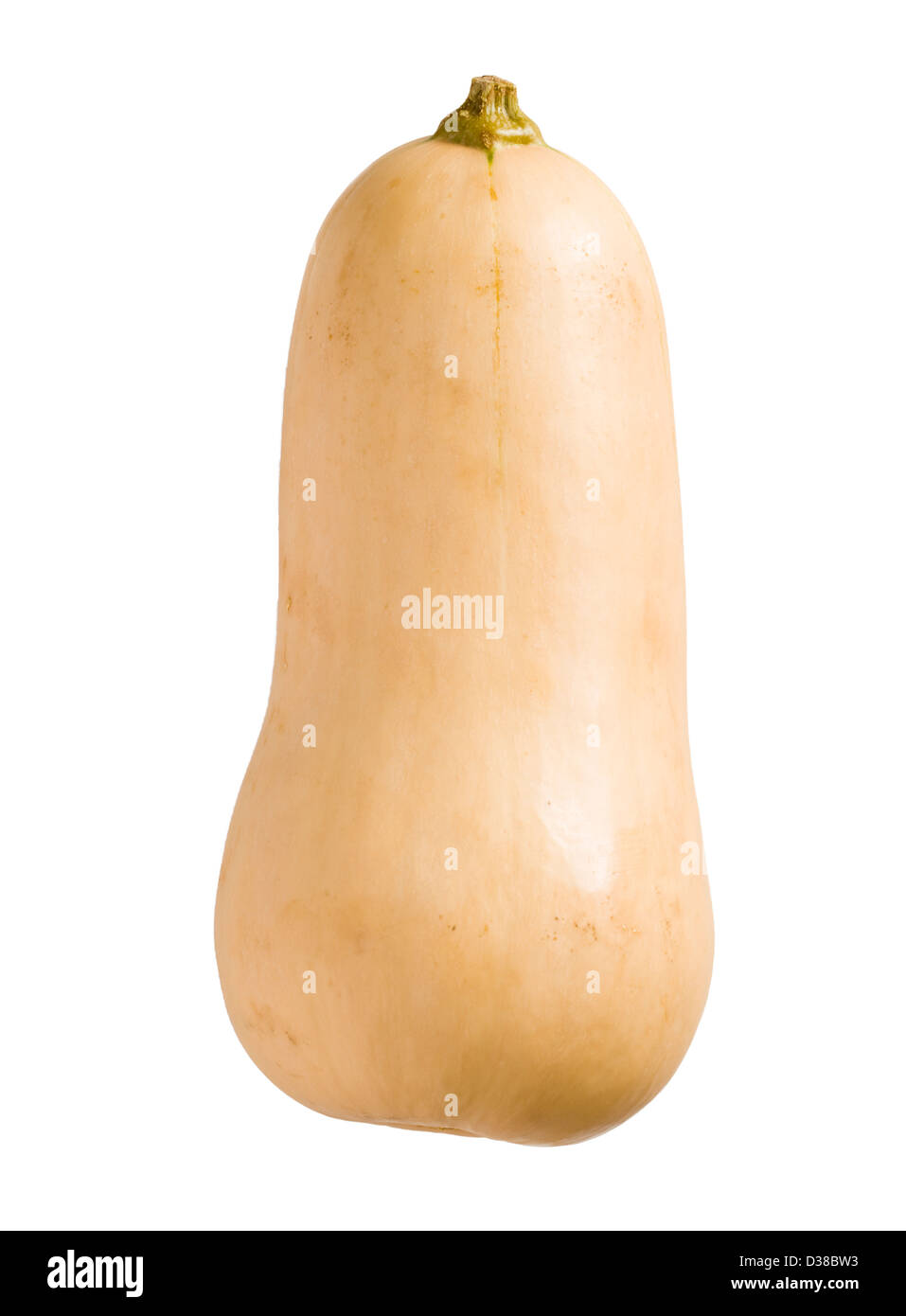 Courge Butternut. Photo Stock