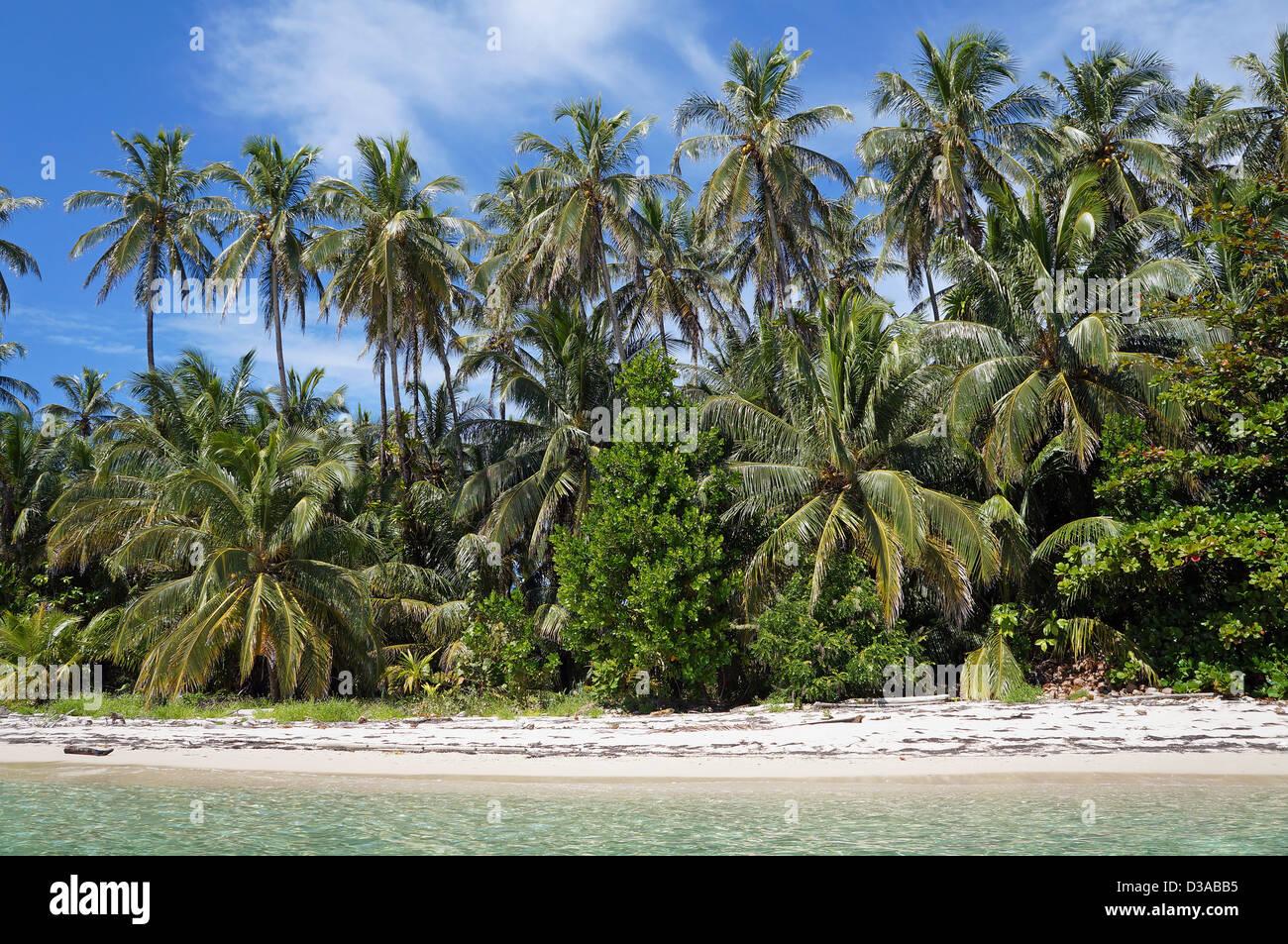 Plage de sable sauvages rive avec végétation tropicale luxuriante, mer des Caraïbes Photo Stock