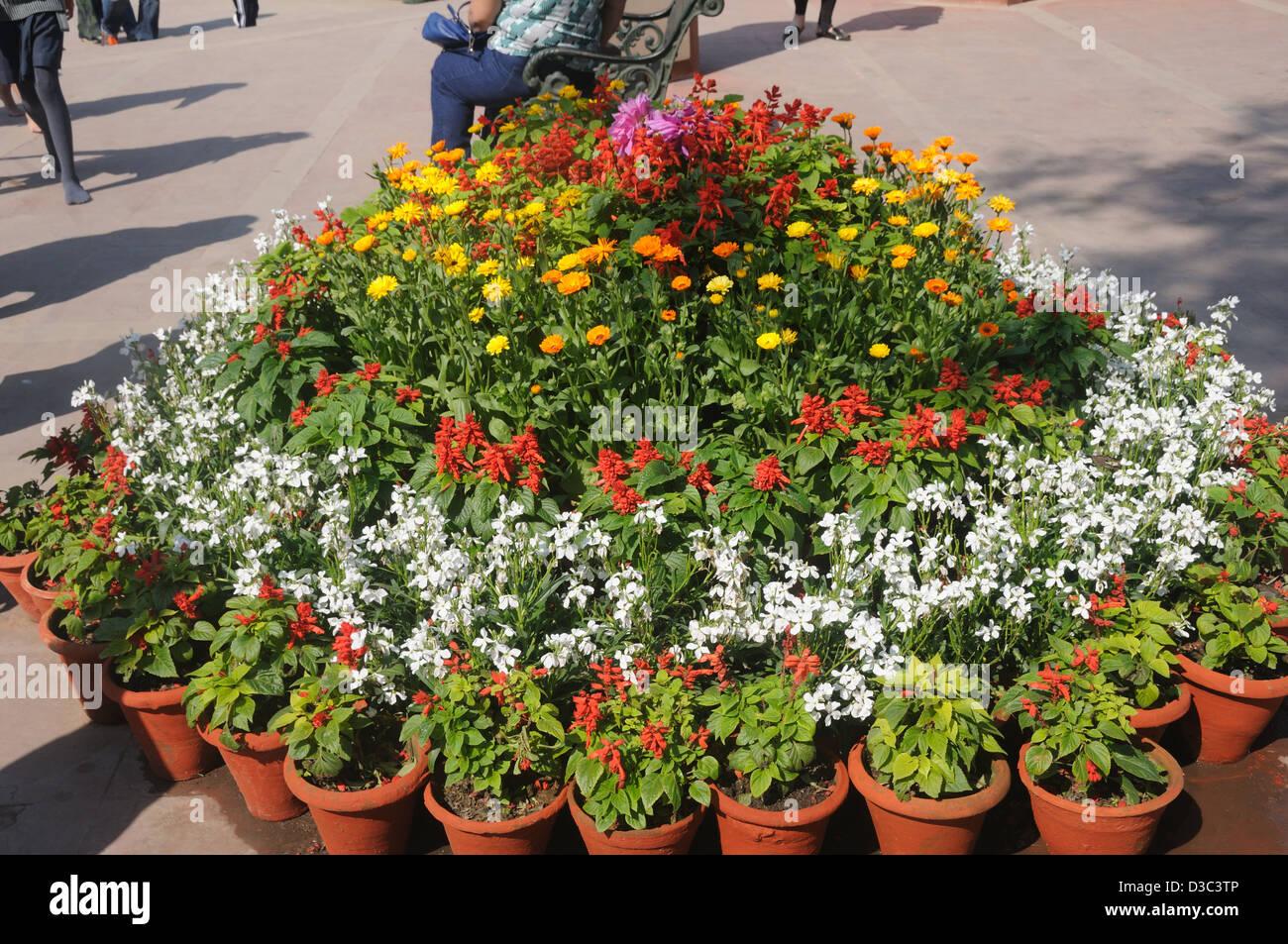 Pots de fleurs à Delhi, Inde Photo Stock