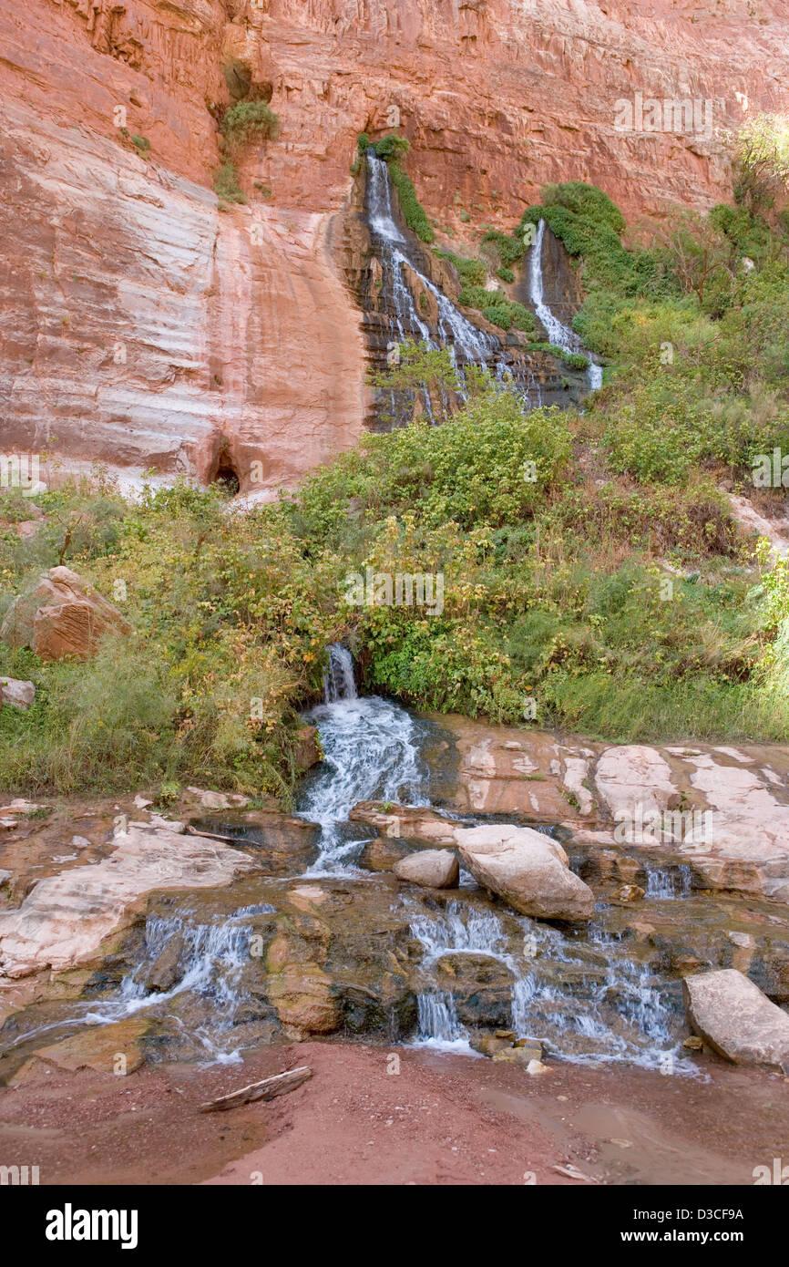 Vasey's Paradise Springs qui sortent d'un mur à l'intérieur de la falaise Grand Canyon Photo Stock