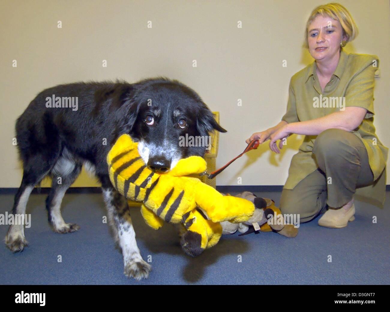 (Afp) - Dog Rico apporte son propriétaire Susanne Baus (R) une peluche dans un appartement à Berlin, le Photo Stock