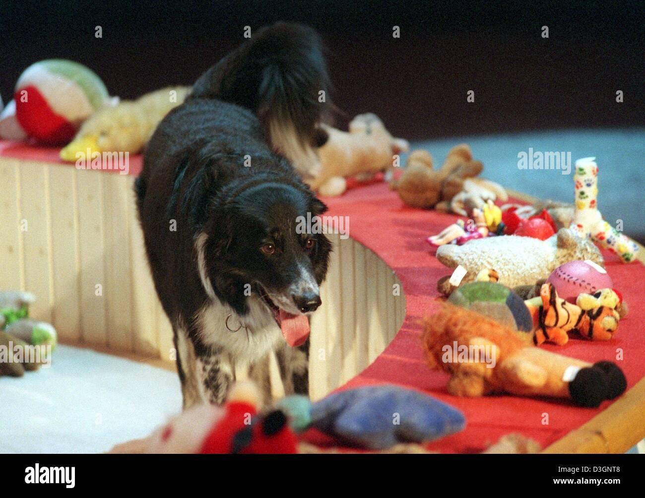 (Afp) - Dog Rico une ligne de peluches au cours de l'émission de jeu allemand 'Wetten, dass...?' Photo Stock