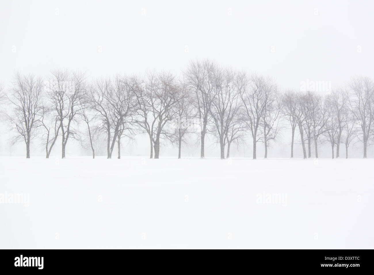 Arbres en hiver paysage Photo Stock