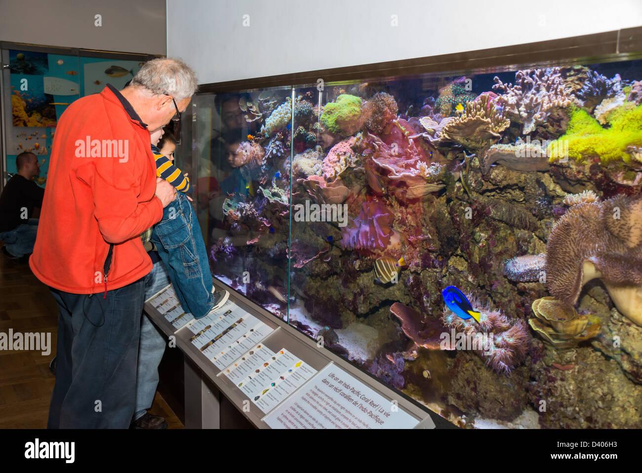 Homme et enfant à la recherche dans un grand aquarium marin au Musée royal de l'Ontario, Toronto, Photo Stock