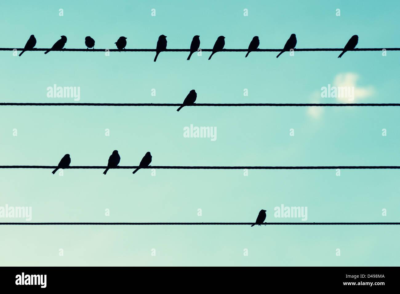Les oiseaux sur les câbles d'alimentation, comme les notes de musique. Photo Stock