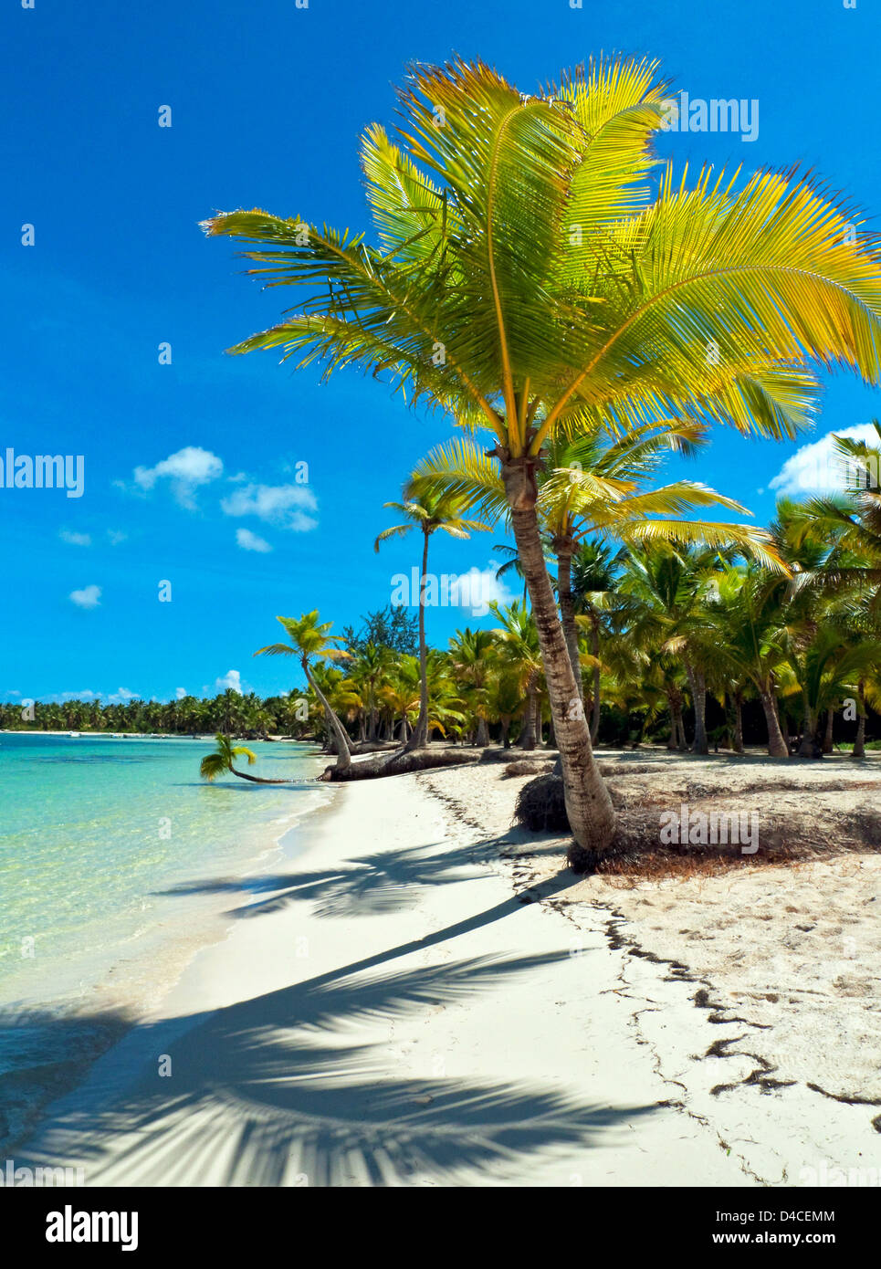 Palms à Playa Bavaro, Punta Cana, République dominicaine, les Caraïbes, l'Amérique Photo Stock